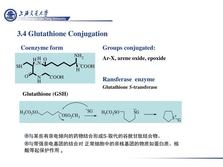 3.4 Glutathione Conjugation