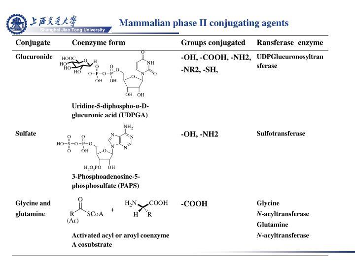 Mammalian phase II conjugating agents