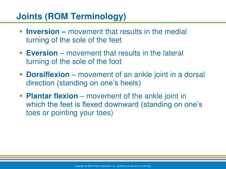 Joints (ROM Terminology)