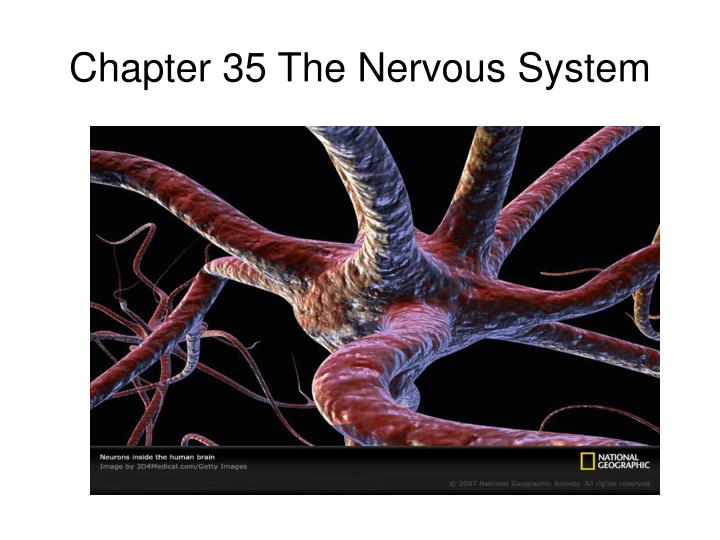 Chapter 35 the nervous system