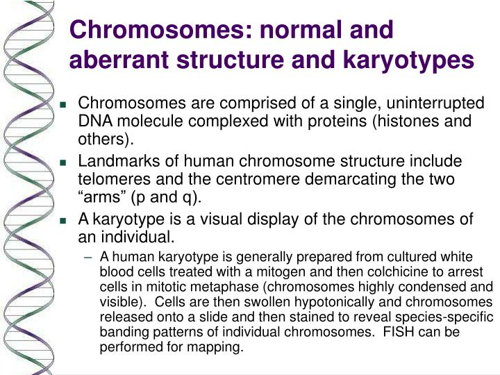 PPT Chromosomes Normal And Aberrant Structure And