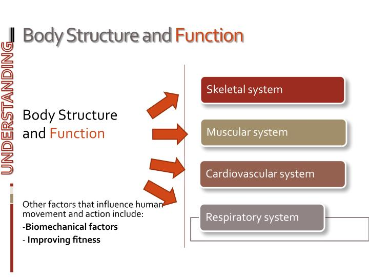 Body structure and function