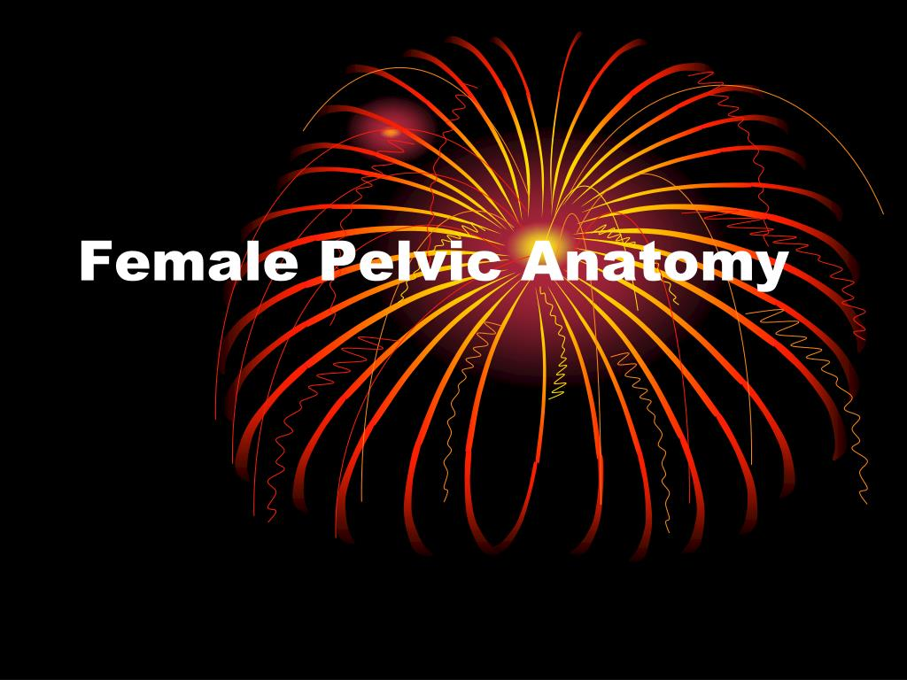 PPT - Female Pelvic Anatomy PowerPoint Presentation - ID:5391607