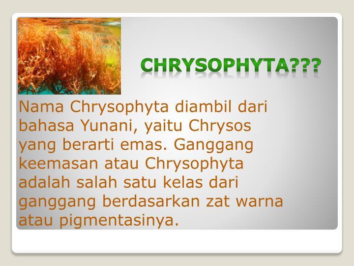 Chrysophyta1
