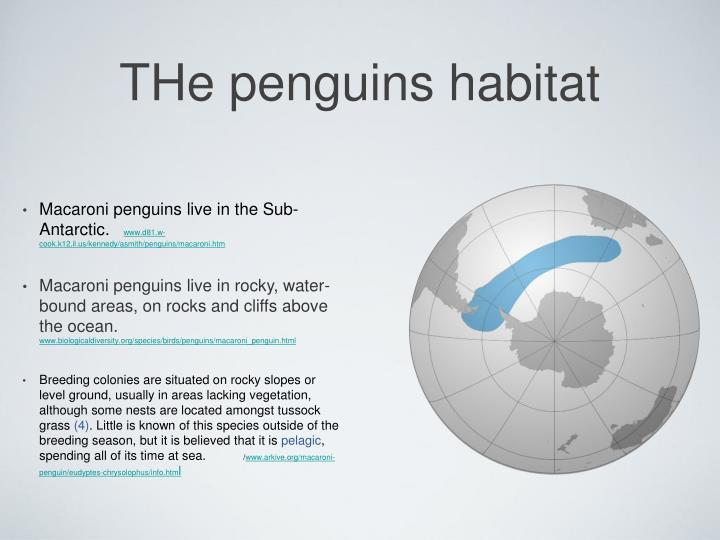 THe penguins habitat