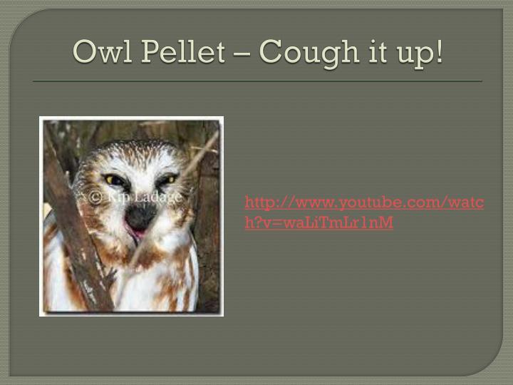 Owl Pellet – Cough it up!
