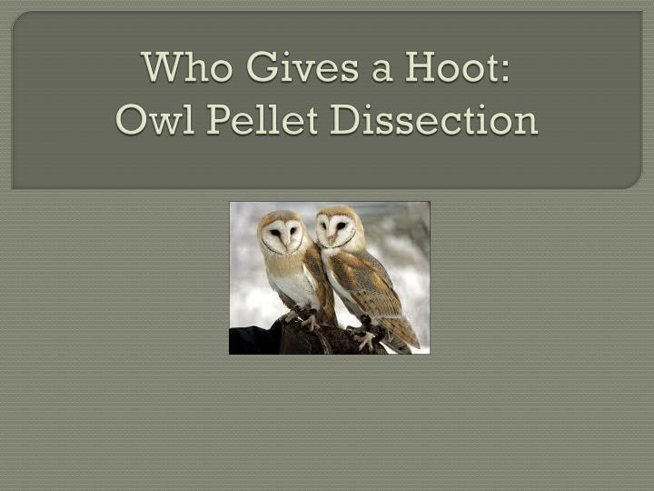 Who gives a hoot owl pellet dissection