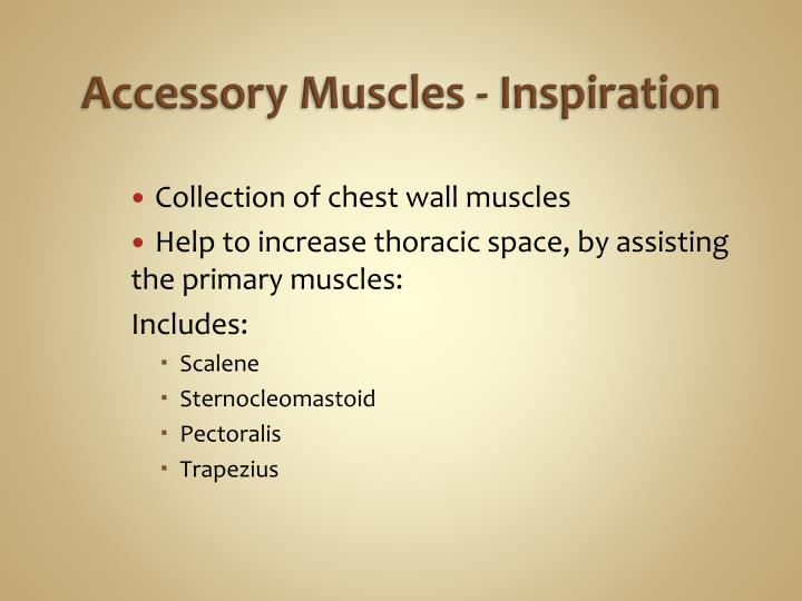 Collection of chest wall muscles