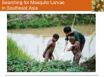 searching for mosquito larvae in southeast asia