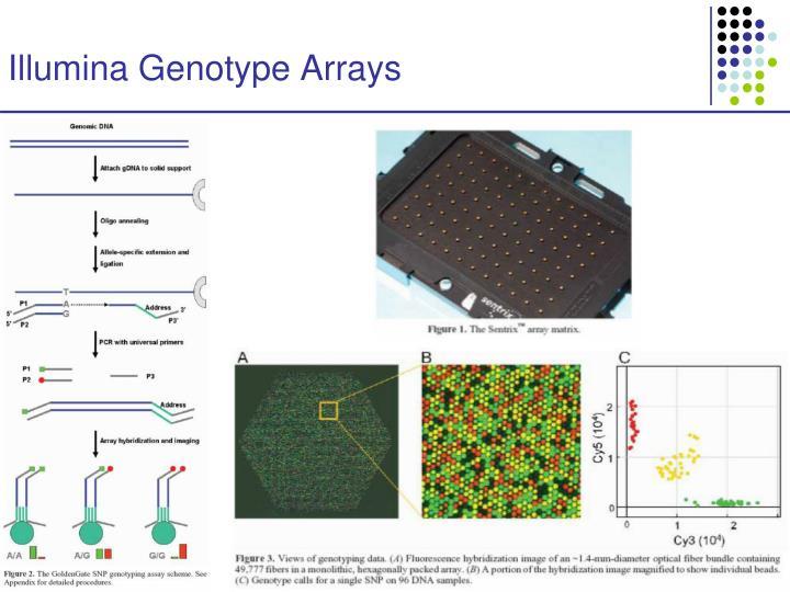 Illumina Genotype Arrays