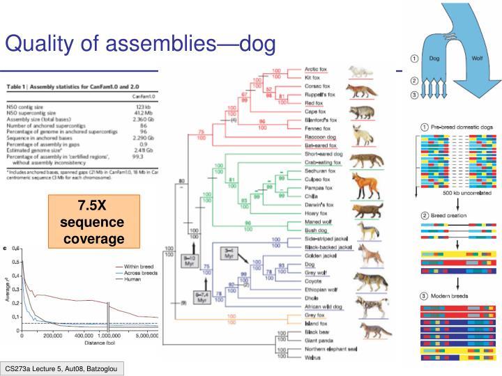 Quality of assemblies—dog