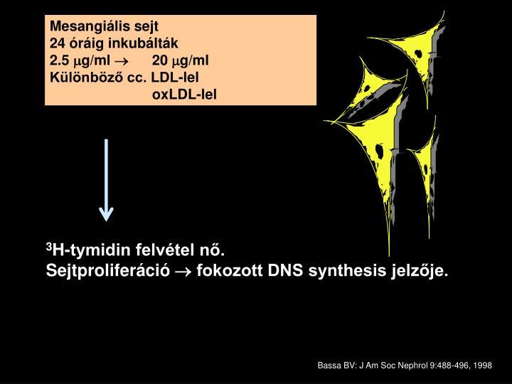 Mesangiális sejt