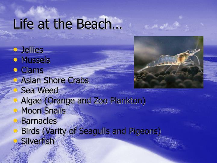 Life at the Beach…