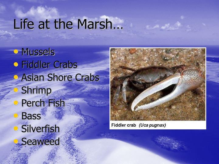 Life at the Marsh…