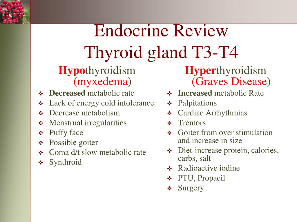 PPT - Endocrine Review Pituitary-ADH PowerPoint Presentation - ID