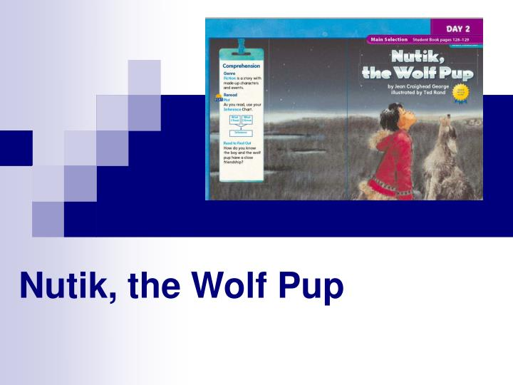 Nutik the wolf pup