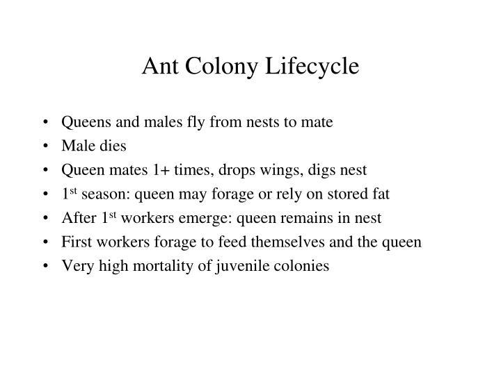Ant Colony Lifecycle