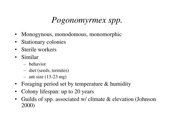 Pogonomyrmex spp.