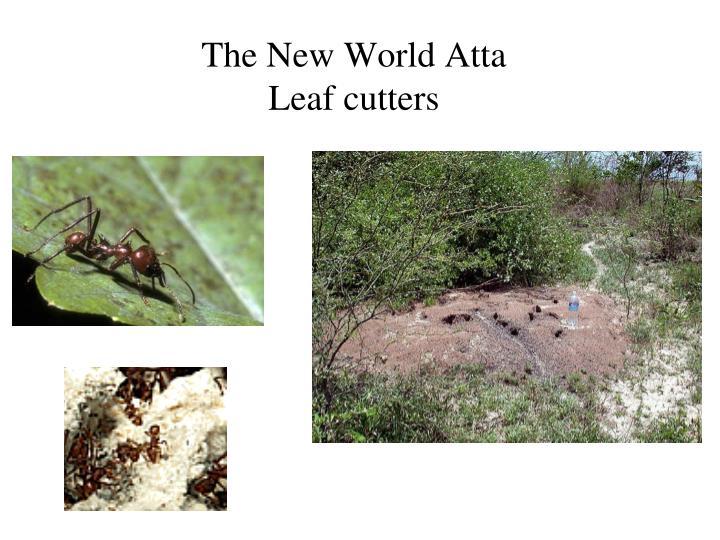 The New World Atta