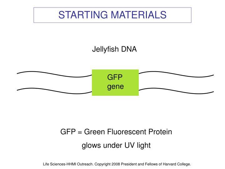 GFP gene