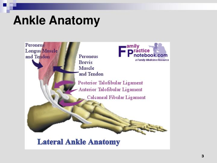 Ppt Disorders Of The Ankle And Foot Powerpoint Presentation Id