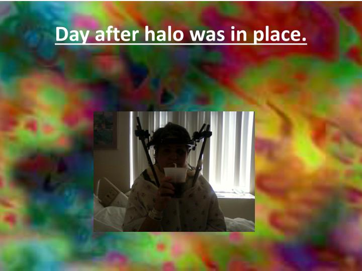 Day after halo was in place.