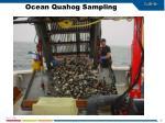 ocean quahog sampling