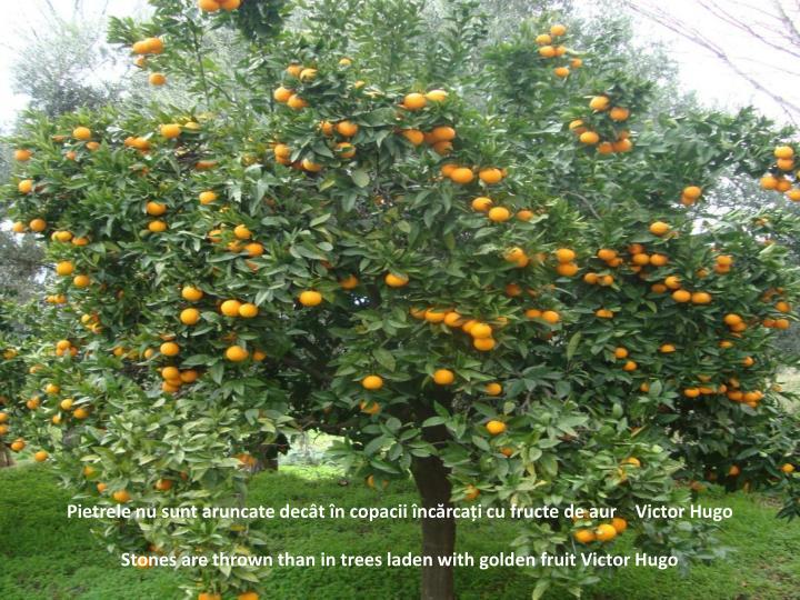 Pietrele nu sunt aruncate decât în copacii încărcați cu fructe de aur