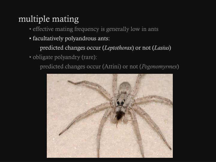 multiple mating