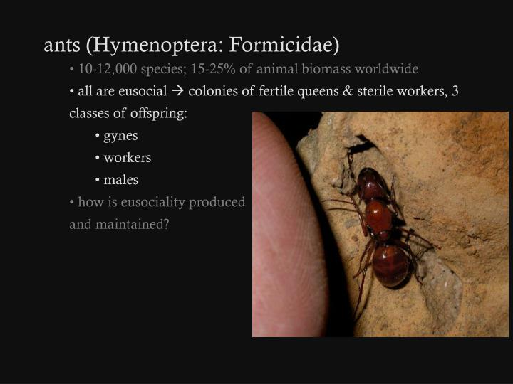 Ants (Hymenoptera: Formicidae)