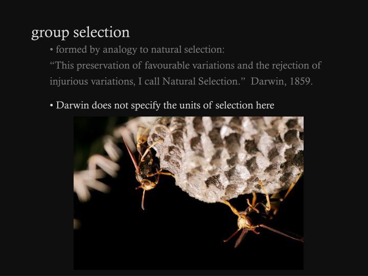 group selection