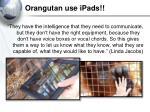 orangutan use ipads