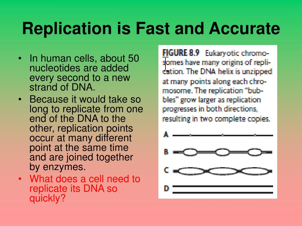 PPT - Chapter 8: From DNA to Protein 8.1: Identifying DNA ...