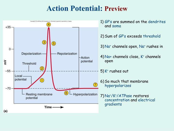 Action potential preview