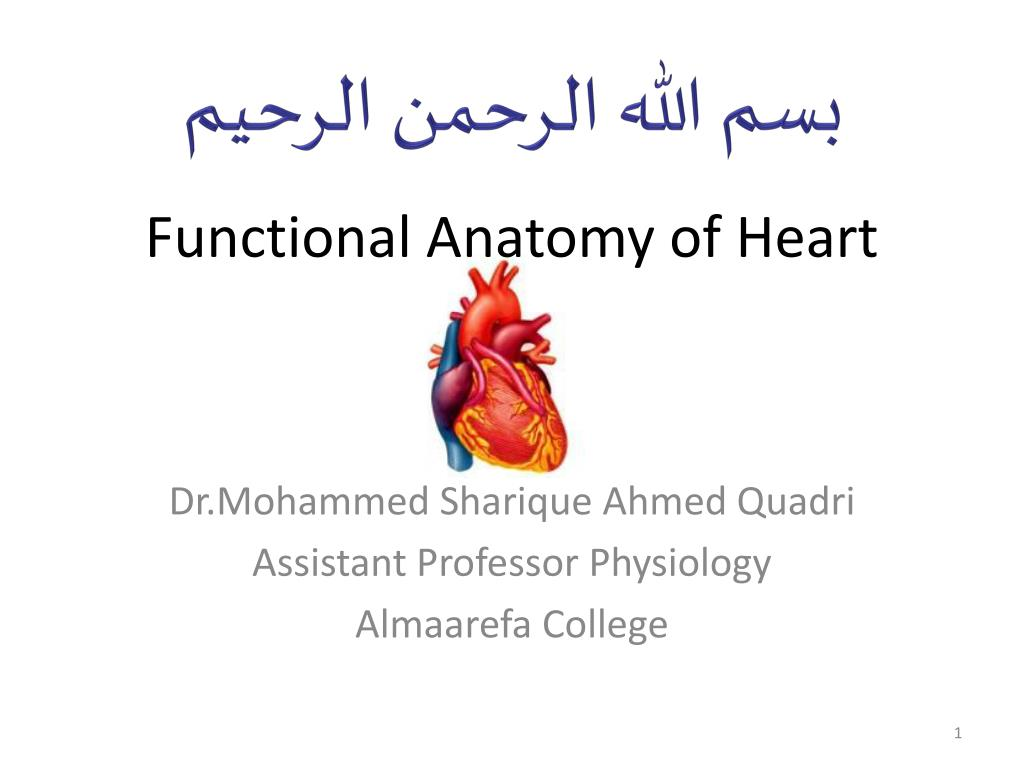 PPT - Functional Anatomy of Heart PowerPoint Presentation - ID:5414445