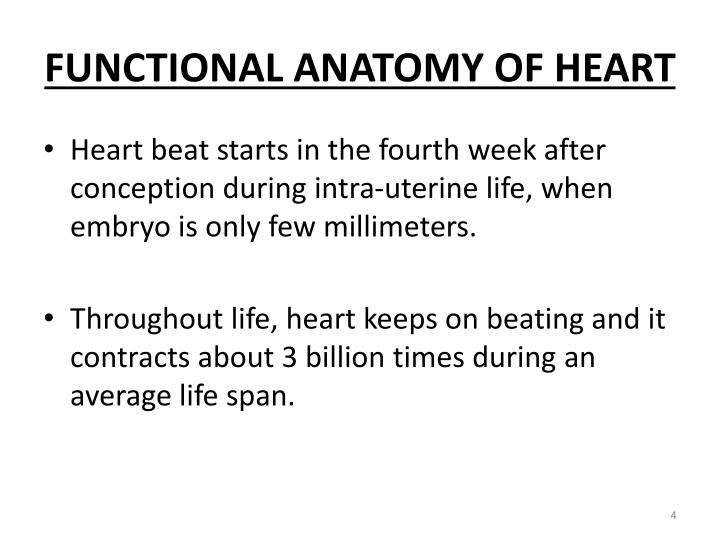 Ppt Functional Anatomy Of Heart Powerpoint Presentation Id5414445