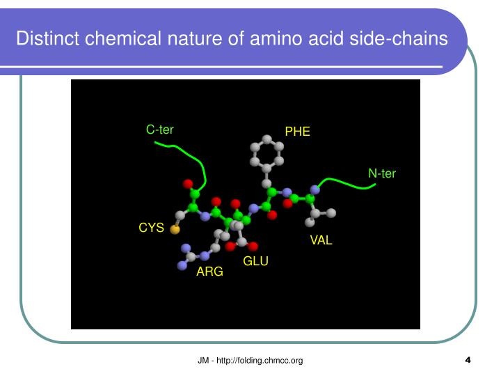 Distinct chemical nature of amino acid side-chains