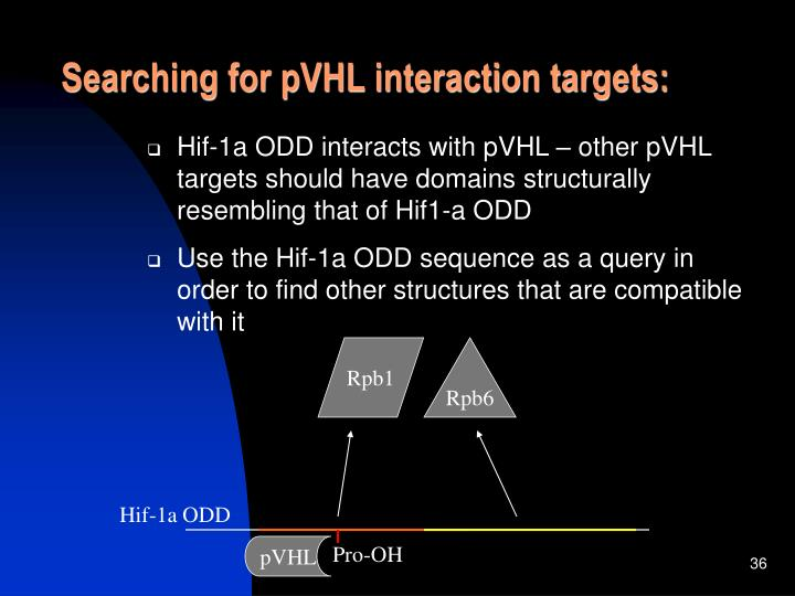 Searching for pVHL interaction targets: