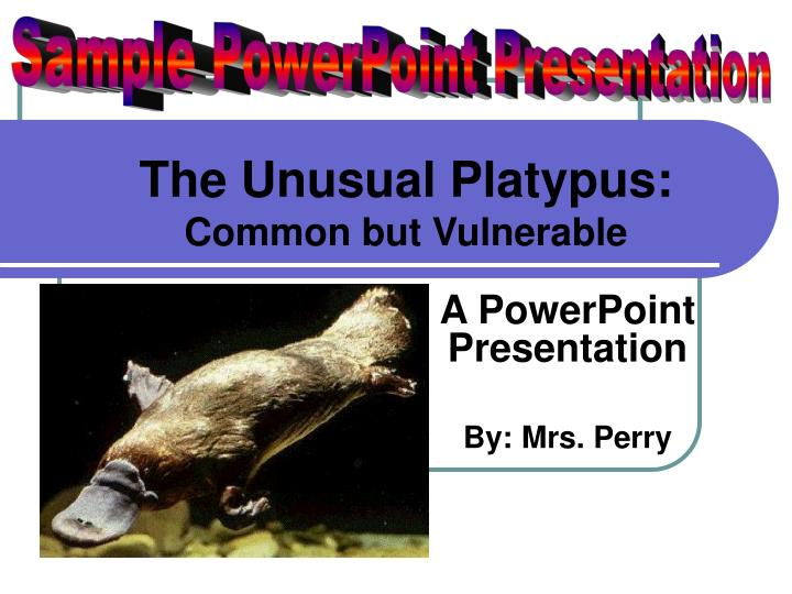 the unusual platypus common but vulnerable n.
