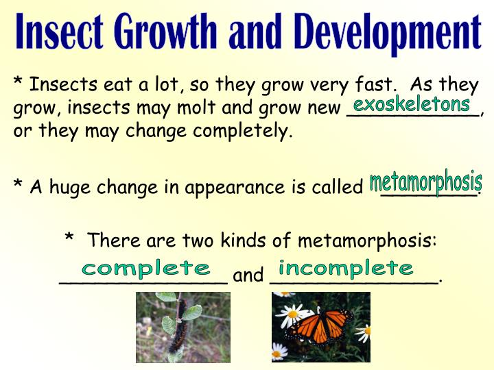 Insect Growth and Development