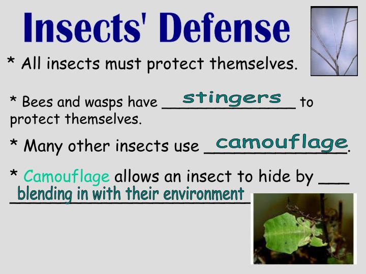 Insects' Defense