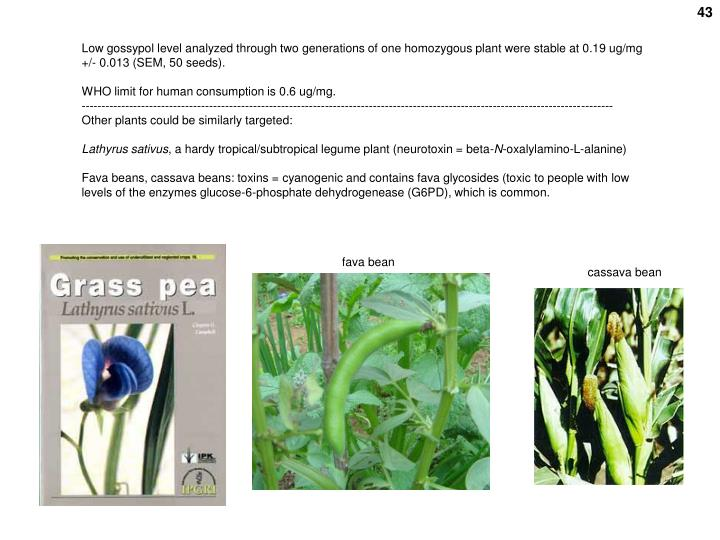 Low gossypol level analyzed through two generations of one homozygous plant were stable at 0.19 ug/mg +/- 0.013 (SEM, 50 seeds).