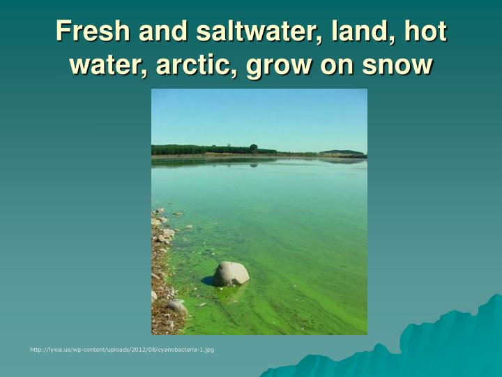 Fresh and saltwater, land, hot water, arctic, grow on snow