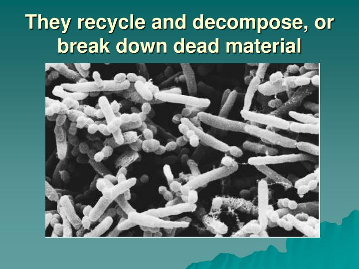 They recycle and decompose, or break down dead material