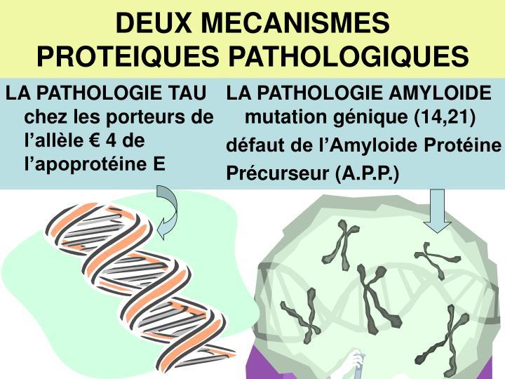LA PATHOLOGIE TAU chez les porteurs de l'allèle € 4 de l'apoprotéine E
