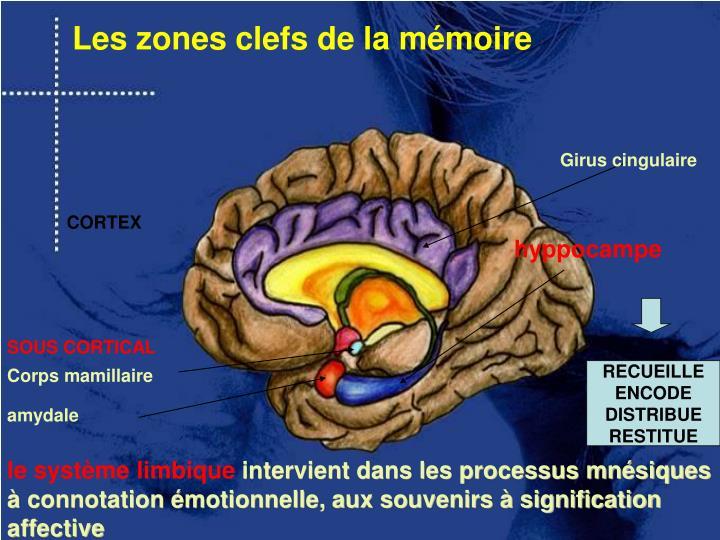Les zones clefs de la mémoire