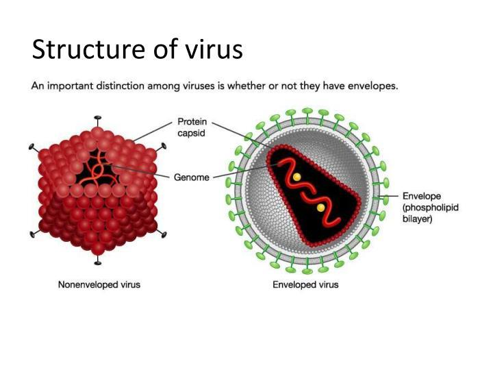 Structure of virus