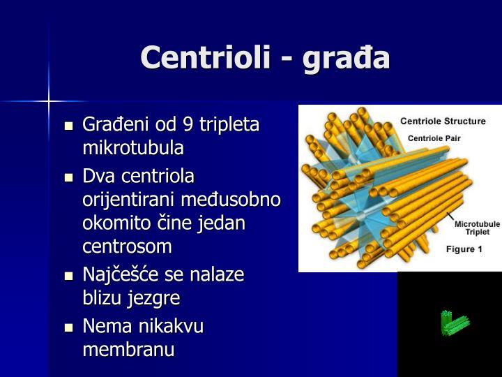 Centrioli - građa