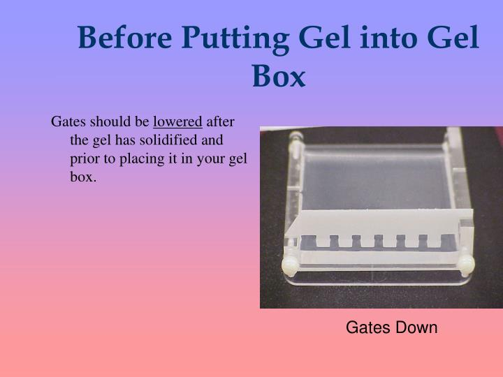 Before Putting Gel into Gel Box