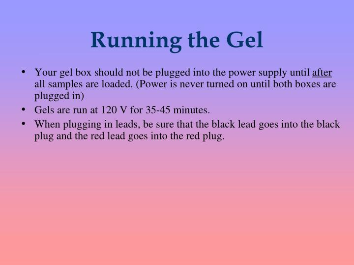 Running the Gel